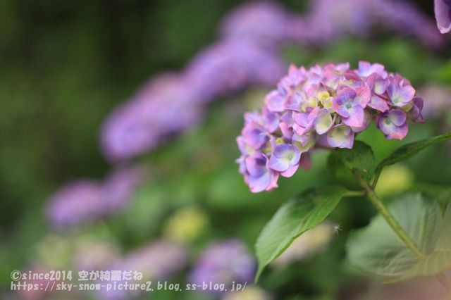 5DM30919_result.jpg