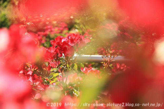 IMG_4770_result.jpg